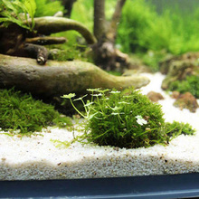 Mineral Natural Aquatic Moss Ball for Aquarium Crystal Red Shrimp Fish Tank New
