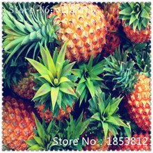 1Bag=100pcs Pineapple seeds Fruit Seeds Green Seeds Rare Exotic Bonsai Potted Gift Plant Decoration Home & Garden Free Shipping