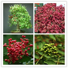 Prickly ash seed taste spicy flavor cooking 50 seeds/bag free delivery Little Garden home plant easy grow watch Best *(China)