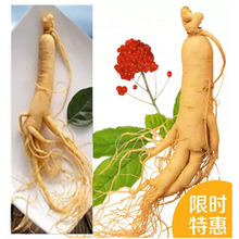 Hot Sale ginseng root insam changbai mountain Chinese herb panax organic ginseng tea health care(China)