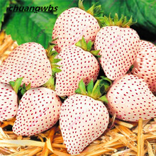300seeds/bag White Strawberry Seeds Rare Sweet Organic White Strawberry Fragaria Fruit seeds for home garden bonsai Plant(China)