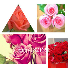 100 seeds / pack, Red Rose  Seeds Grafted Variety flower seeds