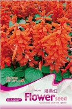 Hot selling 1 pack Red dwarf series bonsai seeds - squelchier red 30 a009 flowers bonsai seeds DIY home garden