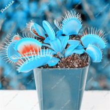 Gardening Seedling Seeds Dionaea Muscipula Giant Clip Venus Flytrap Seeds Exotic Flower Seeds Bonsai Flower Pots Planters 120PC