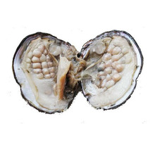 Vacuum-packed 6-7mm Natural Freshwater Cultured Love Wish Pearl Oyster Shell Oyster Jewelry Accessories Approx 25 pcs