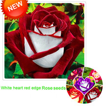 Big Sale!White Red Edge Rose Seeds Garden Seeds Plants Potted Rose Rare Flower Seeds Balcony Indoor 100 PCS/Lot,#S1D7BC(China)