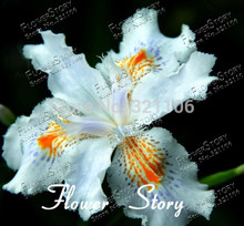 Free Shipping 5 White Iris Seeds,beautiful Perennial  cut flowers and potted plants for home garden,Low maintenance