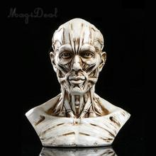 4inch Resin Model Anatomy Skull Head Muscle Bone Art Artist Drawing Teaching Figurine