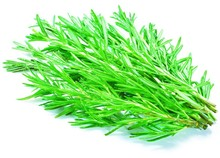 500 Rosemary Seeds DIY Garden Plant Easy To Grow Herb, vegetable seeds healthy plant for home garden