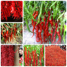 Capsicum seeds, Long Hot chili Seeds, Vegetable pepper Seeds,Ornamental fruit vegetable seeds,about 30 particles,