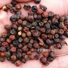 200gram Tree Collected Seeds Of Purple Bomb Purple Bombs Park Hackberry Tree Seeds Rosewood Simple Filming