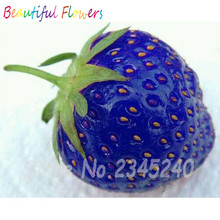 Hot Sale !!!Free shipping 100 PCS Natural Sweet Blue Strawberry Seeds Nutritious Delicious Plant Seed in stock(China)