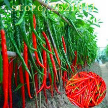 200 pcs seeds long hot pepper seeds , red hot chilli peppers, fruit and vegetable seeds