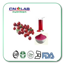 Kosher/Halal/ISO High quality cranberry extract,Fruit juice concentrate cranberry extract powder(China)