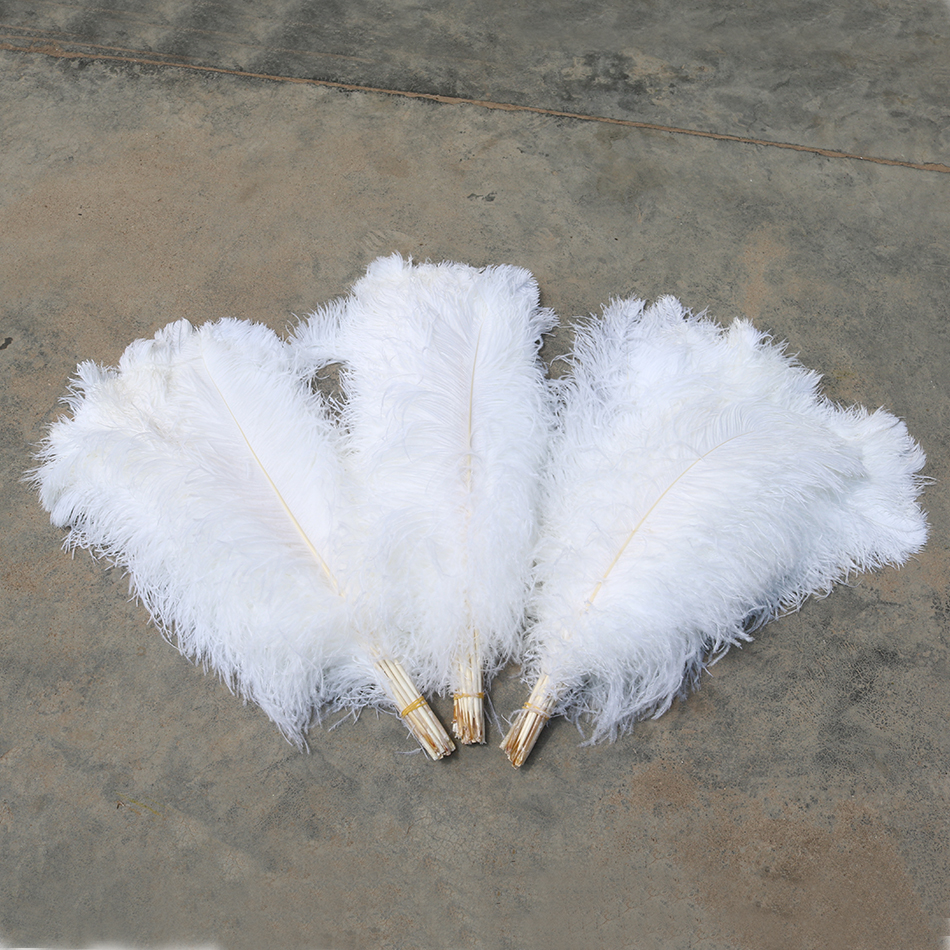 ostrich feather 2