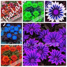 Rare 21 Variety of Colors Africa Gazania Sunflower Medal Daisy Species Chrysanthemum Potted Fresh Flowers Seeds 100 Pcs / Bag