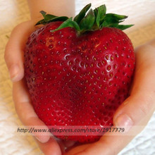 200pcs/Giant strawberry seeds rare Organic edible fruit seeds in Bonsai,organic fruits strawberry seeds for Home Garden Plants