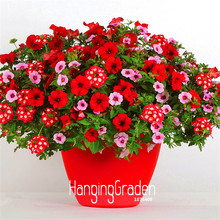 Time-Limit!!Park Glamorous Girl Mixed Garden Petunia Seeds,100 Seed/Pack,Lipstick Candy Hearts and Feminine Beauty,#IM9YUZ