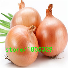 New Delicious 100pcs Giant Onion Seeds Organic Russian Heirloom Garden Supplies For Fun Interest DIY(China)