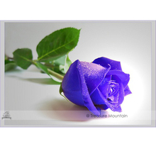 1 Professional Pack, 50 seeds / pack, Purple European Rose Plant Seed Strong Fragrant Rose Flower #NF408(China)