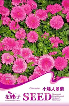 1 Original Pack 50 Seeds / Pack china aster Seeds, any season is suitable Indoor bonsai flowering plants