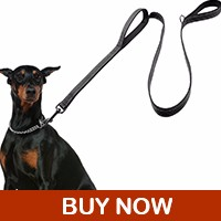 dog-leash_08