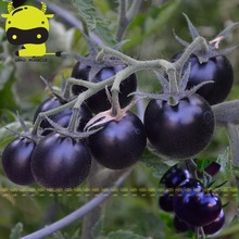 Rare Black Smurfs Tomato Seeds Non-GMO Seeds, 50 Seeds/Pack, Fresh Organic Fruits Delicious Vegetable Plant Bonsai(China)