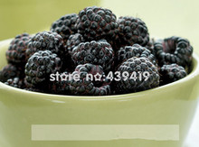 New Arrival!!! 300pcs Black Raspberry Seeds new Strawberry seeds fruit seeds for flower pot planters delicious and fresh(China)