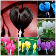 100 pcs/bag Dicentra Spectabilis seeds Bleeding Heart classic cottage garden plant, heart-shaped flowers in spring,rare orchid(China)