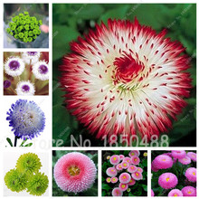 200 pcs Perennial Bonsai Flower Seeds Daisy Flower Seeds, Nature Growth, Garden Decoration Plant Flower Seeds For Sale!