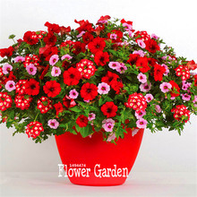 New Arrival!Park Glamorous Girl Mixed Garden Petunia Seeds,100 Pcs/Lot,Lipstick Candy Hearts and Feminine Beauty,#YI57Z9