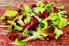 100 Seeds A Bag New Arrival!Mesclun Mix Seeds,All Lettuce Salad Mix, easy to grow vegetable seeds
