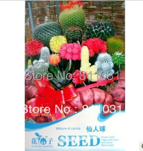 Cactus Seed 10pcs/bag Mixed Colors Flower Seeds Resistance Dry Cactual Ball Seeds Original Packing DIY home garden free shipping