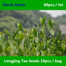 China Famous Longjing Tea Seeds 60pcs, Widely Cultivated Dragon Well Tea Shrub Seeds, Very Popular West Lake Long Jing Cha Seeds(China)