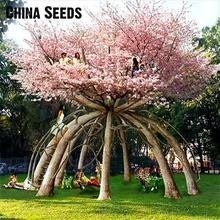 Hot Selling 10 Pcs Japanese Sakura Seeds Oriental Cherry Blossom Seeds Bonsai Plants For Home & Garden Flower Seeds Gift