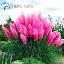 200 Pcs Pampas Grass Seeds Patio And Garden Potted Ornamental Plants New Flowers (pink Yellow White Purple) Cortaderia Grasses *(China)