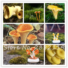 100 pcs Mushroom Seeds Succlent Plant Edible Health Orangic Vegetable Mushroom Seeds Morning Glory Shape For Happy Farm