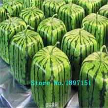 Big sale 30pcs SQUARE WATERMELON SEEDS SWEET FRUIT SEEDS NEW GENERATION SCARCE HOME GARDEN courtyard PRECIOUS HEIRLOOM FREE SHIP