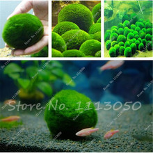 New Live in the Aquarium Plants, Moss Grass Seed Plants Seeds Indoor Ornamentals Lanscape for Home Garden 500 Pcs Free Shipping(China)