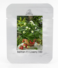 Beltran F1 Strawberry Seeds, 1 Professional Pack, 100 Seeds / Pack, Early Flowering and Continuous Production #NF550