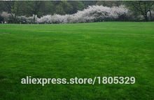 Lawn Seed 200pcs lawn Grass Seeds Fresh Green Soft Runner Natural Plant Free shipping