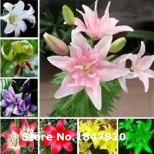 AAA Promotion! 100pcs perfume Lily Seeds, Lily flower Seeds Germination 99% creepers bonsai DIY garden