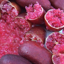 Imported Rose Red Finger Lime Pomegrante Plant seeds, 10 seeds, professional pack, a must for garden rare plant E4124