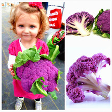 100 Pcs Nutritious Purple Cauliflower Seeds Low Carb! Rich In Anthocyanin Very Easy Plant Garden Natural Organic Green Food(China)