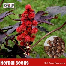 15pcs Red Castor Bean Seeds, Medicinal Uses Ricinus Communis Herbal Seeds, Ornamental Plant Seeds