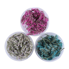 1 Box Sea Lavender Dried Flowers Nail Art DIY Preserved Flower With Bottle Nail Art Decorations(China)