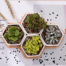 5pcs/set Modern Hexagon Flowerpots White Ceramic Succulent Plant Pot with Bamboo Stand Bonsai Planter Garden Supply Home Decor