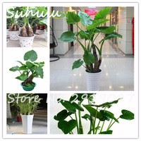 50pcs-bag-Dishlia-Seeds-Hydroponics-Seed-Indoor-Plants-Flower-Plants-for-home-garden-easy-to-grow.jpg_200x200
