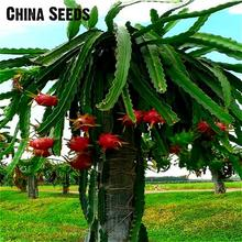 Sale (1$ + Gift) 100pcs Pitaya Seeds White Dragon Fruit Seeds Trees Dwarf Plants Bonsai Seed For Home & Garden Free Shipping