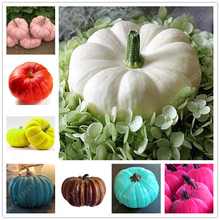 20pcs giant pumpkin seeds,big Squash-Zucchini seeds,bonsai organic fruit vegetable seeds,14 colours ,plant for home garden(China)